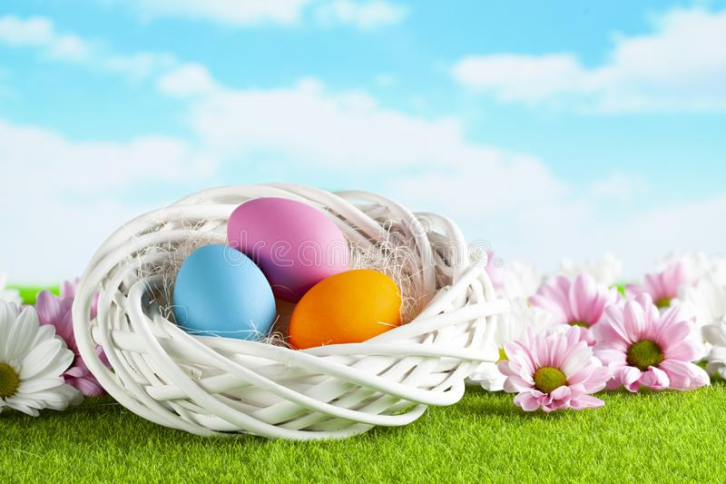 Three colored Easter eggs in the nest, pink and white flowers on grass and sky background royalty free stock photos