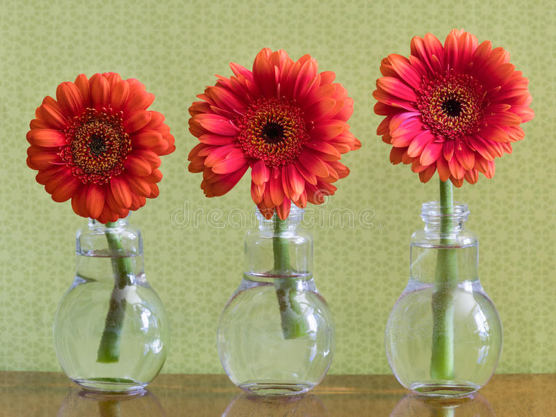Three Colorful Daisy Flowers In Individual Vases stock photo