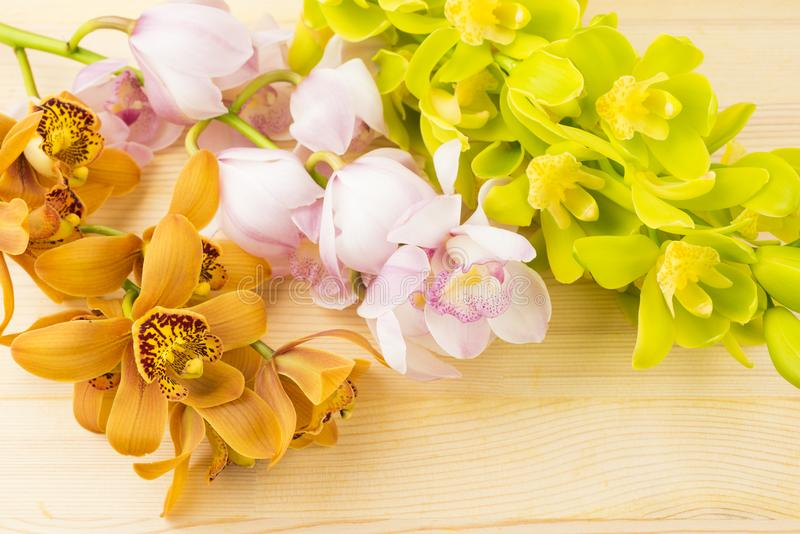 Three colors of orchid flowers stock images