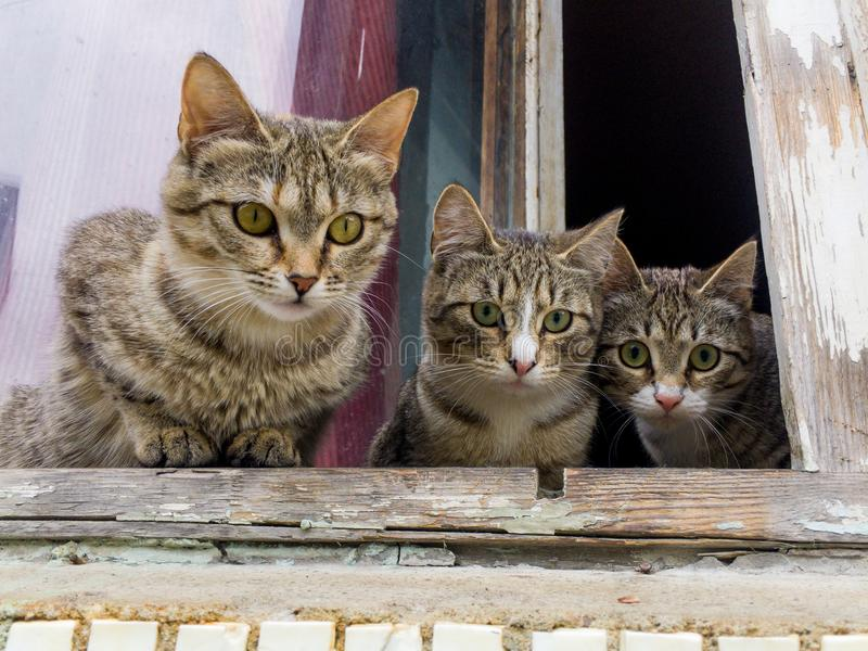 Three curious kittens sit on the window and look at the street royalty free stock images