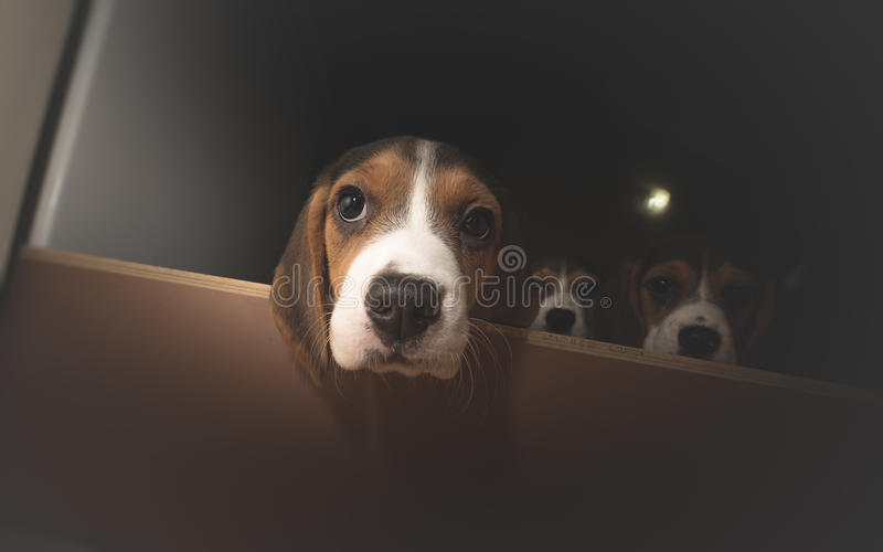 Three curious puppies royalty free stock image