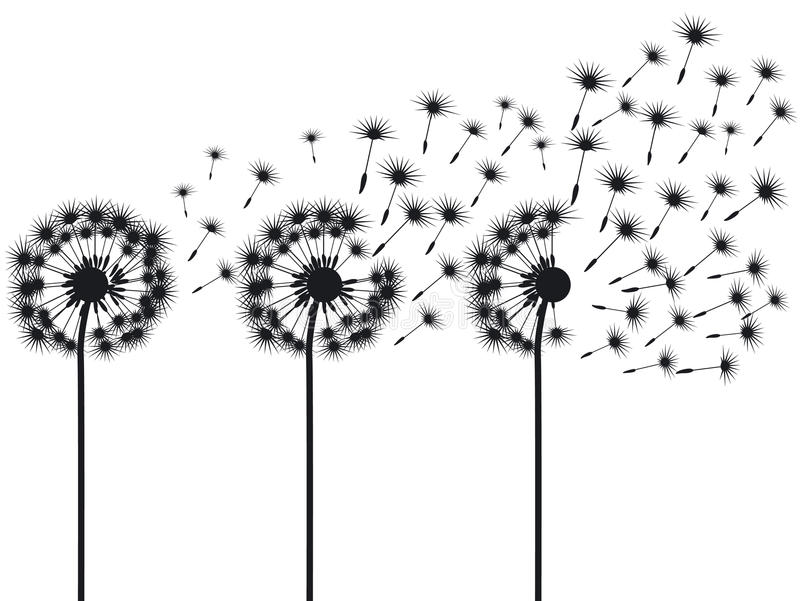 Three dandelions vector illustration
