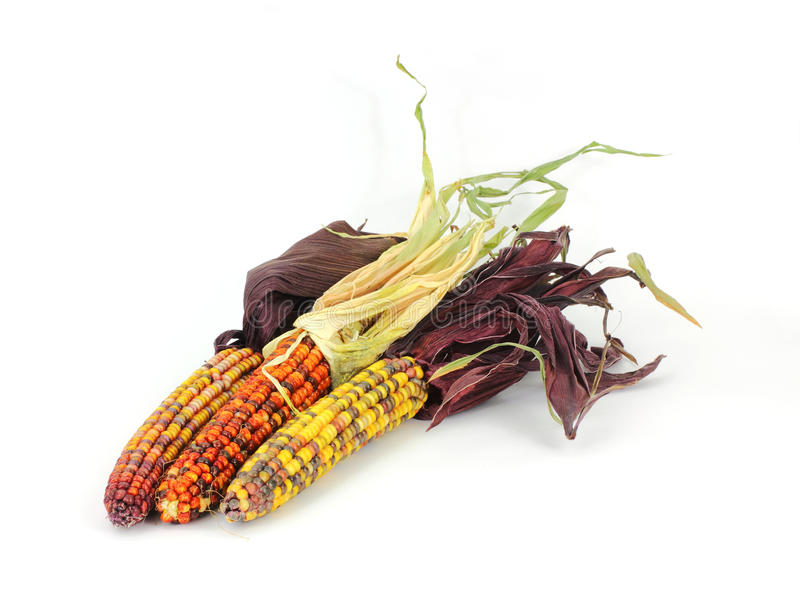 Three Decorative Fall Corn Cobs royalty free stock photography