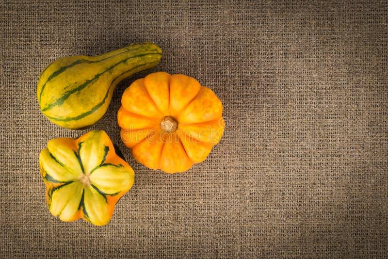Three decorative pumpkins on linen background stock photography