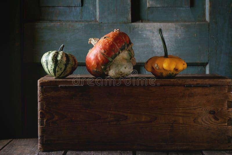 Three decorative pumpkins royalty free stock photography