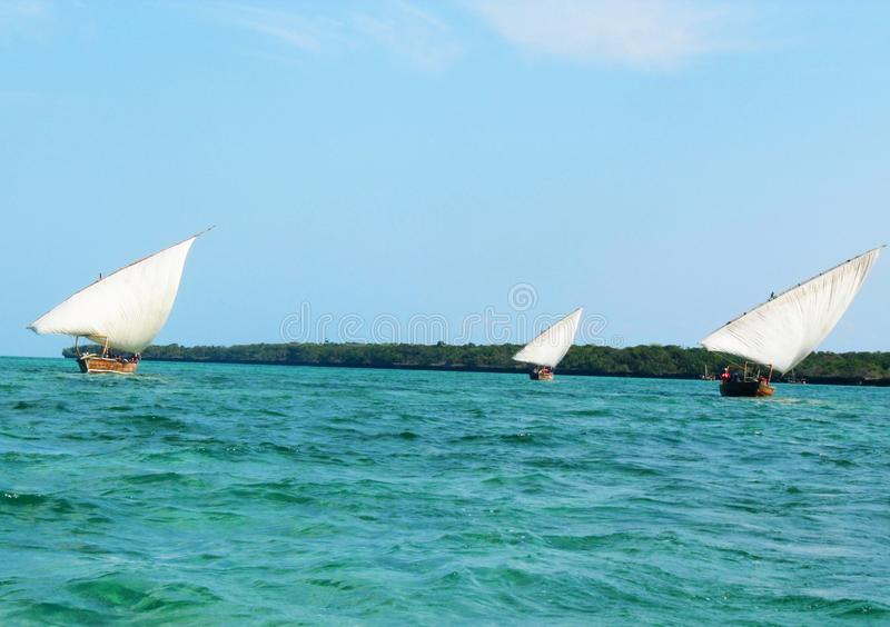Three dhows heading for home after a successful adventure. Traditional timber dhows under wind power in the waters of Zanzibar stock photo