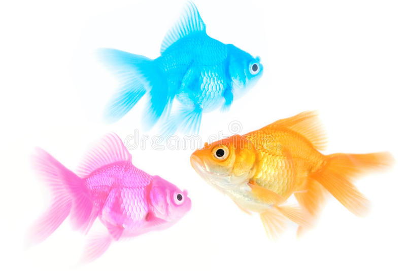 Three different color fishes. Isolated on white stock photography
