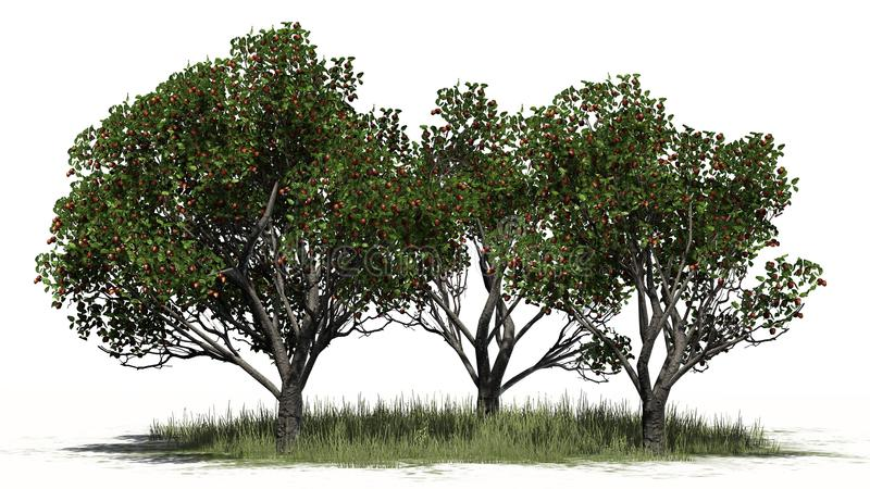 Three differently Red delicious apple trees with fruits on grass area. With shadow on the floor - separated on white background stock illustration