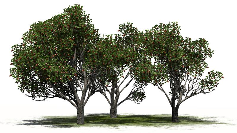 Three differently Red delicious apple trees with fruits. On green area with shadow on the floor - separated on white background royalty free illustration