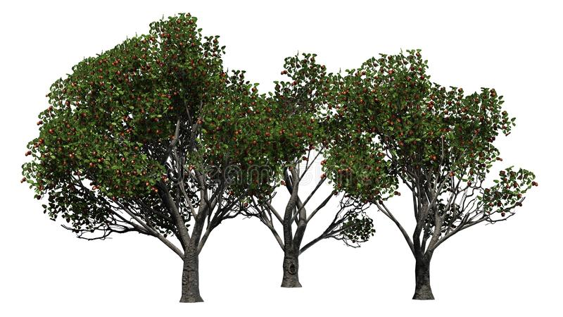 Three differently Red delicious apple trees with fruits. Separated on white background stock illustration