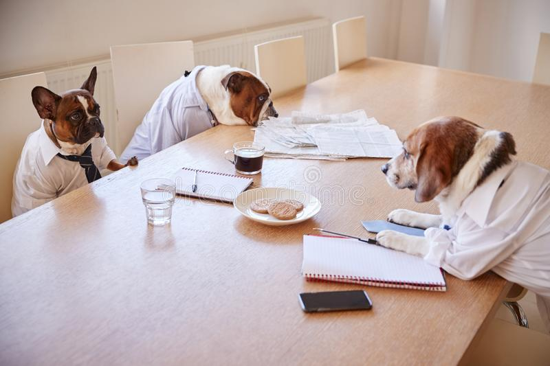 Three Dogs Dressed As Businessmen Having Meeting In Boardroom royalty free stock photo