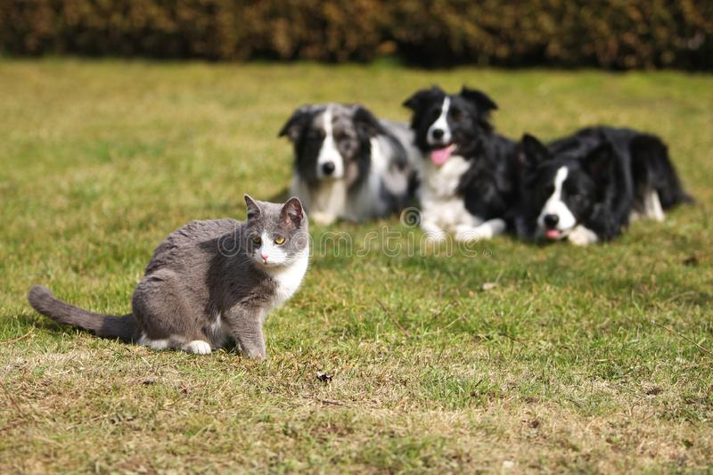Download Three Dogs Gazing Into A Cat Stock Image - Image of alertness, cute: 8909819