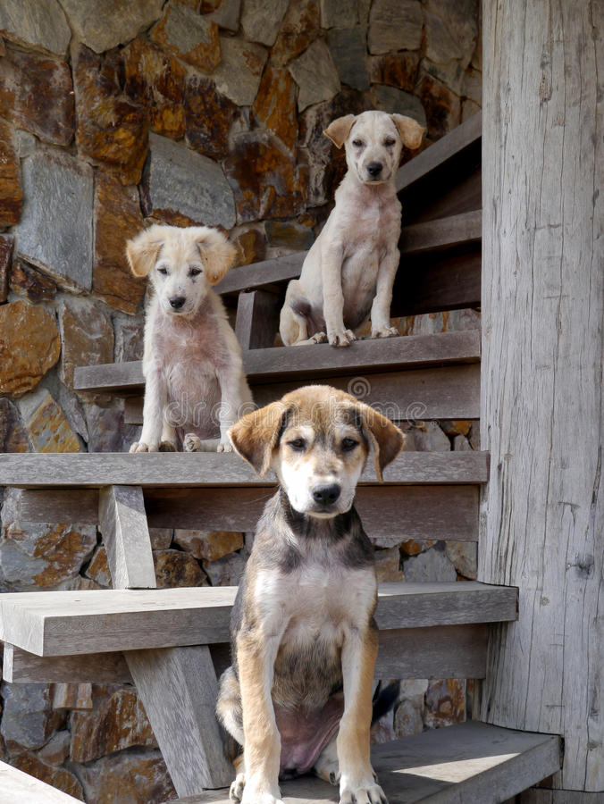 Three dogs on the stairs. Dogs posing and looking funny on the stairs looking funny on the stairs royalty free stock photo