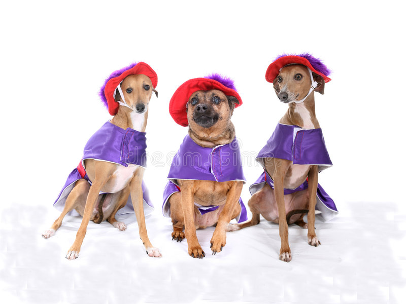 Three dogs wearing red and purple costumes. 3 dogs wearing red and purple hats and dresses stock photos
