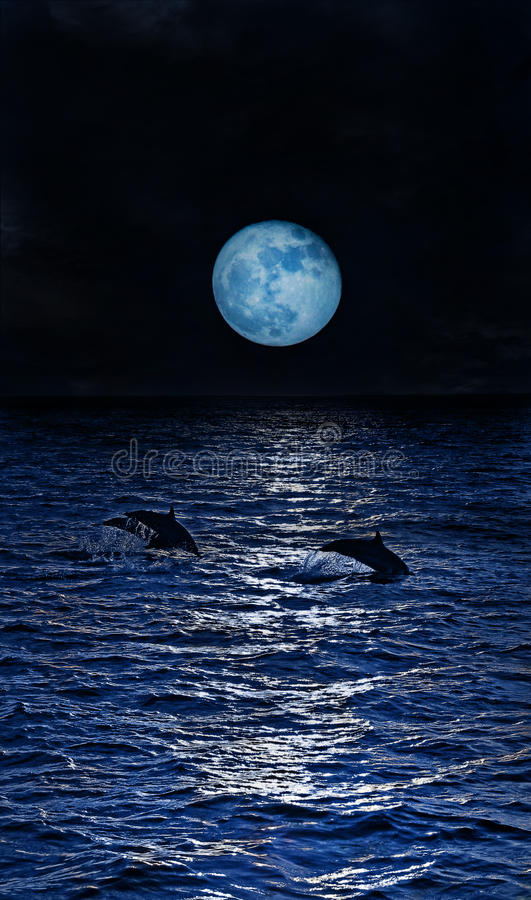 Download Three dolphins stock photo. Image of creature, black - 13237512