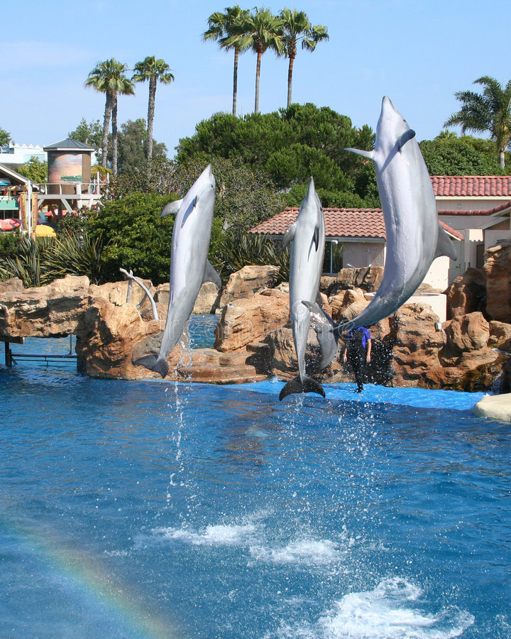 Three Dolphins royalty free stock photo