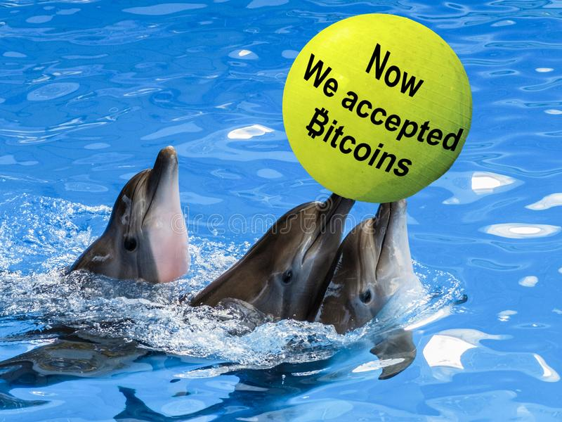 Three Dolphins swim in blue water with a yellow ball labeled now we accepted bitcoins stock image