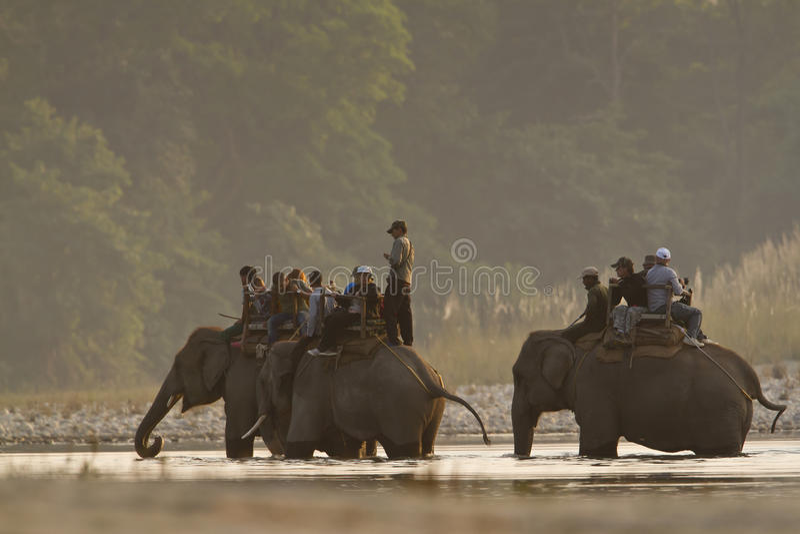 Three domestic elephant in jungle safari in Nepal. Bardia National Park royalty free stock photography
