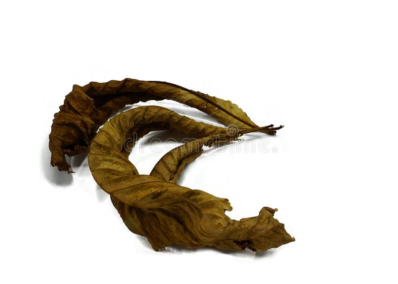 Three dried horsechestnut leaveas isolated on white background royalty free stock images