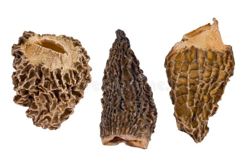 Three Dried Morel Mushrooms stock images