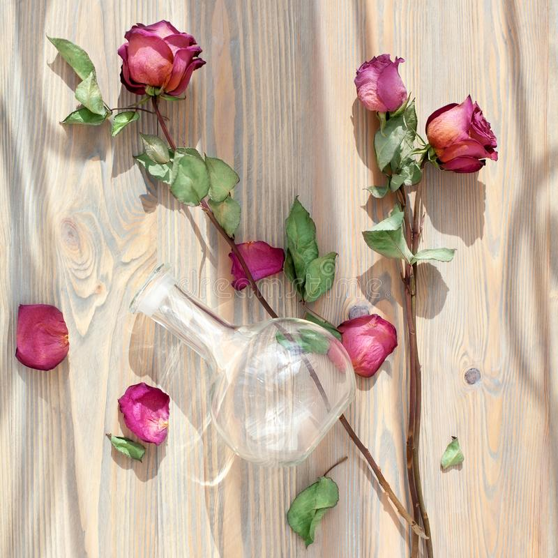 Three dried pink roses, scattered flower petals, green leaves, glass vase on wooden background top view close up royalty free stock photography