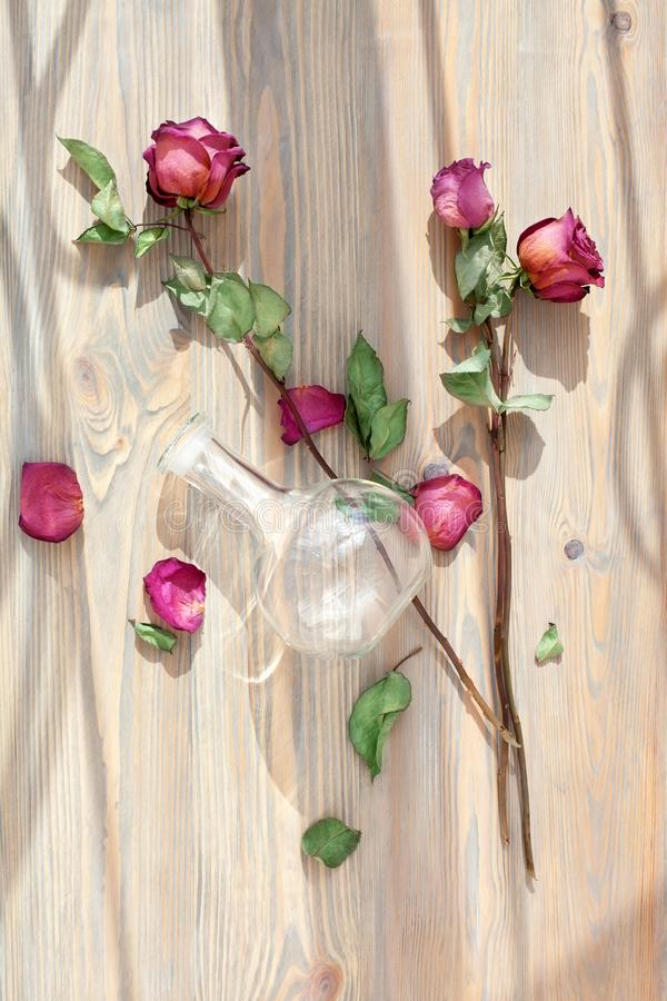 Three dried red roses, scattered flower petals, green leaves, glass vase on wooden background top view close up royalty free stock image