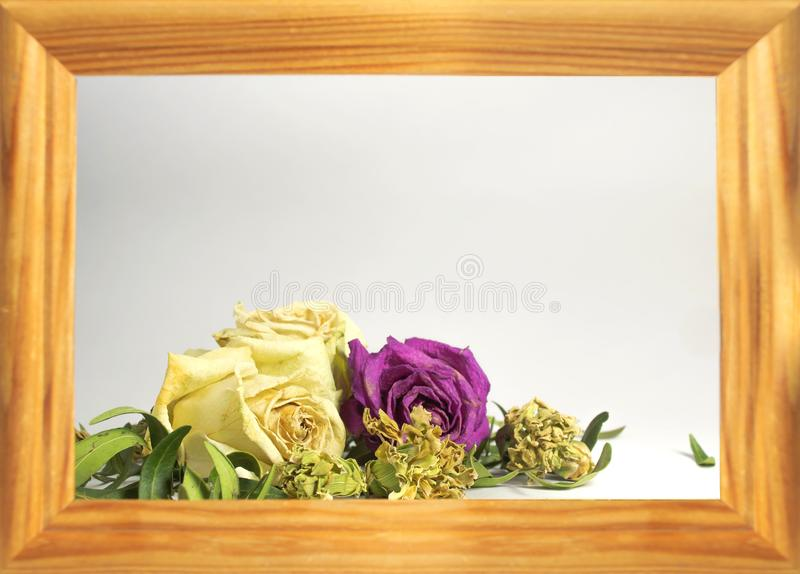 Three dry roses with leaves, two white roses, one pink rose, royalty free stock photo