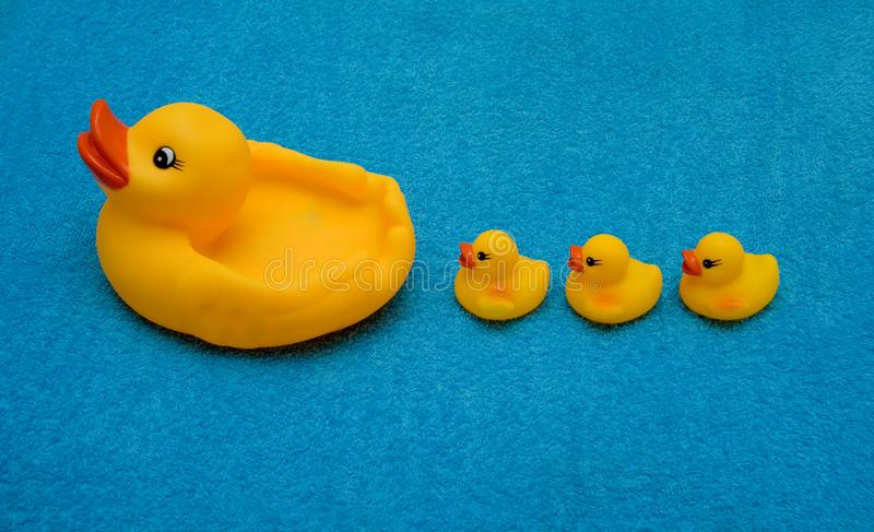 Three ducklings and a duck royalty free stock images