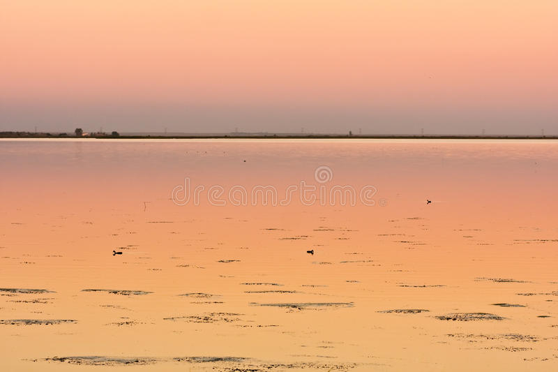 Download Three Ducks On Calm Lake At Sunset Stock Photo - Image of beautiful, background: 15909004