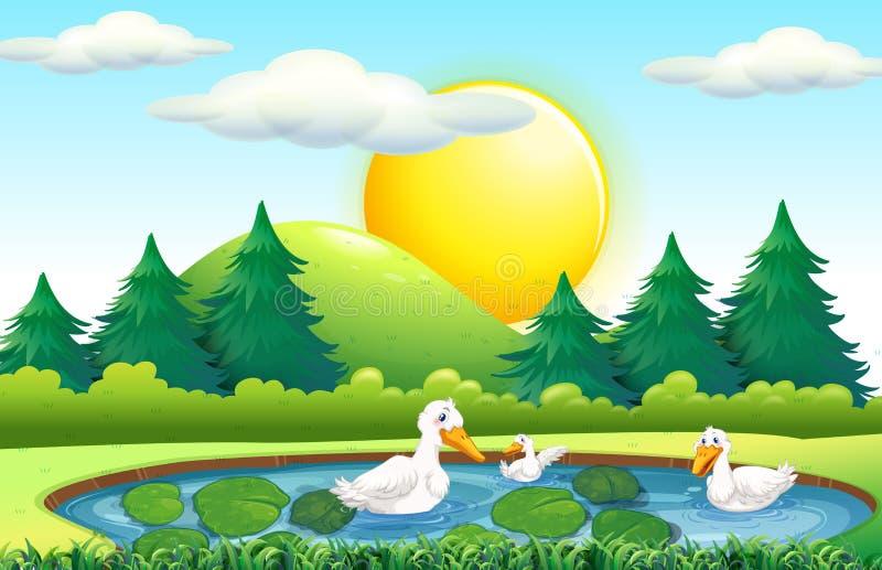 Three ducks in the pond royalty free illustration