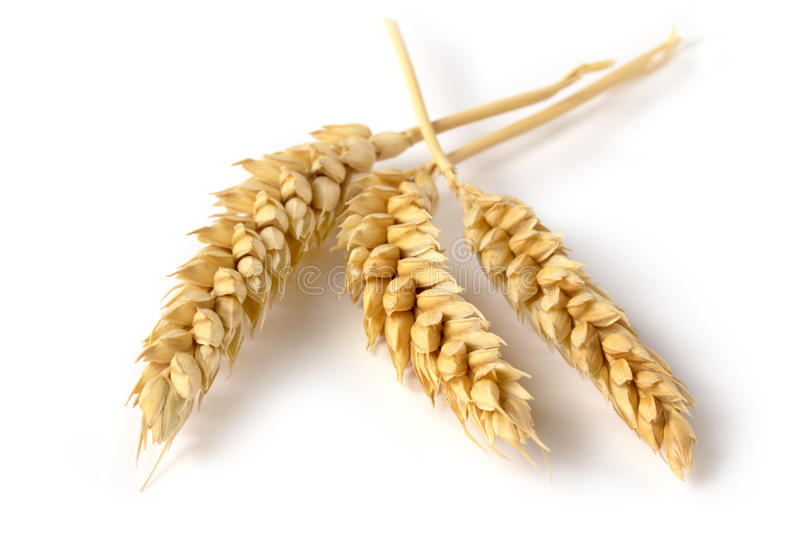 Three ears of wheat royalty free stock images