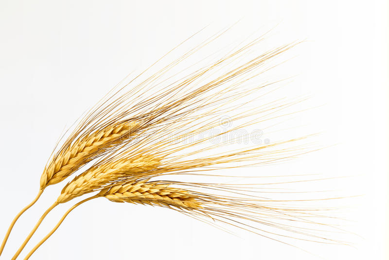 Three ears of wheat on white background stock photos