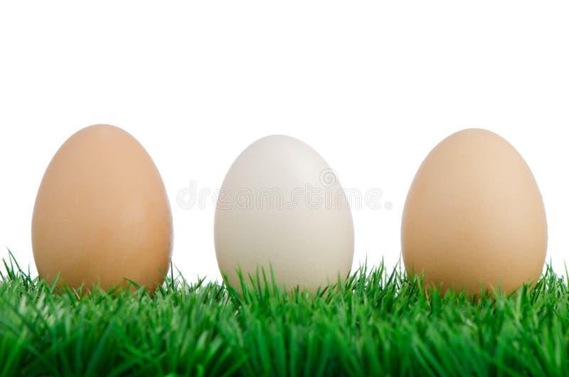 Three eggs on grass royalty free stock photo