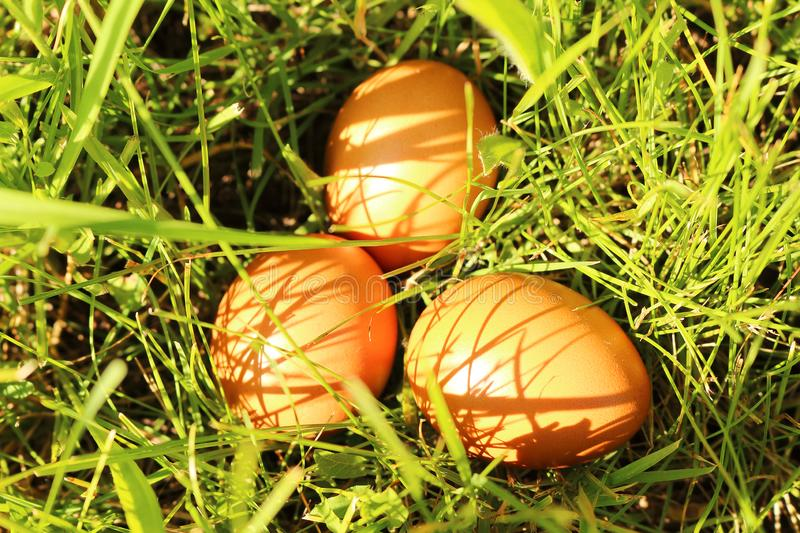Easter eggs in the grass. Three eggs on the nature in the grass stock image