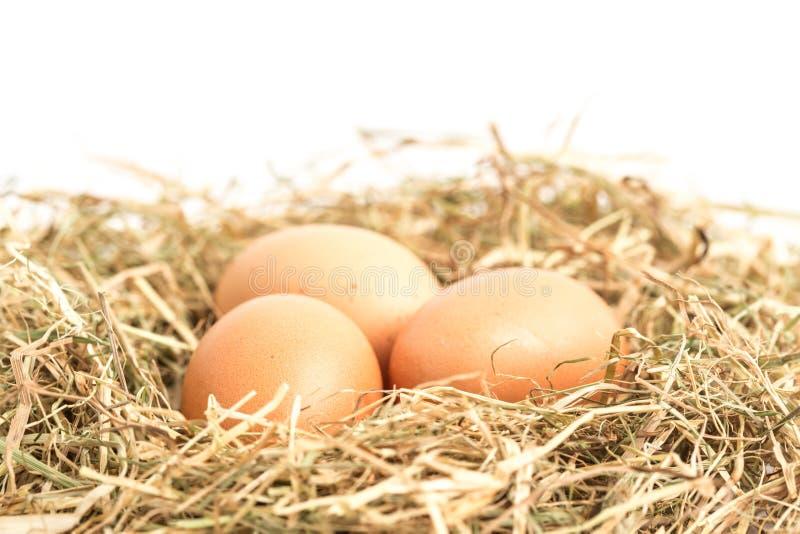 Three eggs nestled in straw