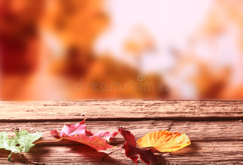Three faded colorful Autumn or fall leaves stock photo