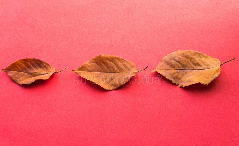 Three fallen leaves. Autumn design elements. royalty free stock photography