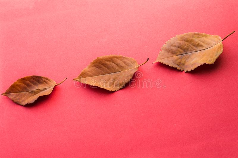 Three fallen leaves. Autumn design elements. stock photography