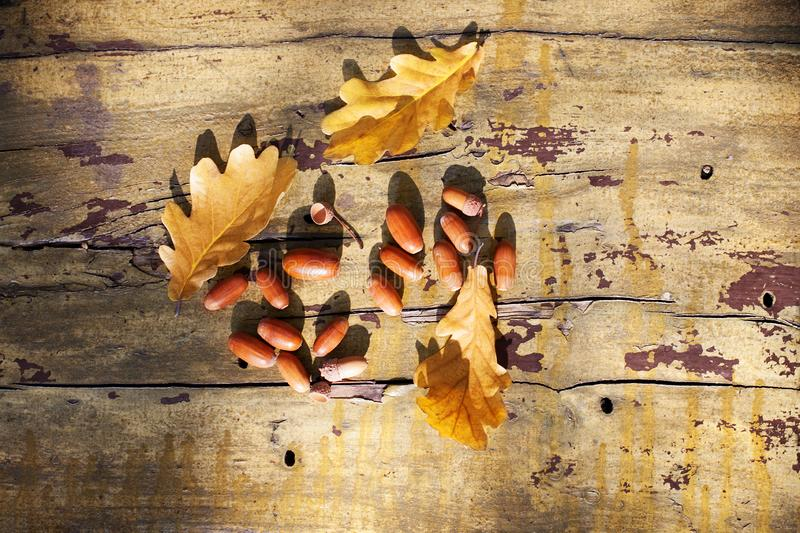 Three fallen yellow oak tree leaves and red acorns on old wooden board background close up, golden autumn foliage on bench in park royalty free stock image