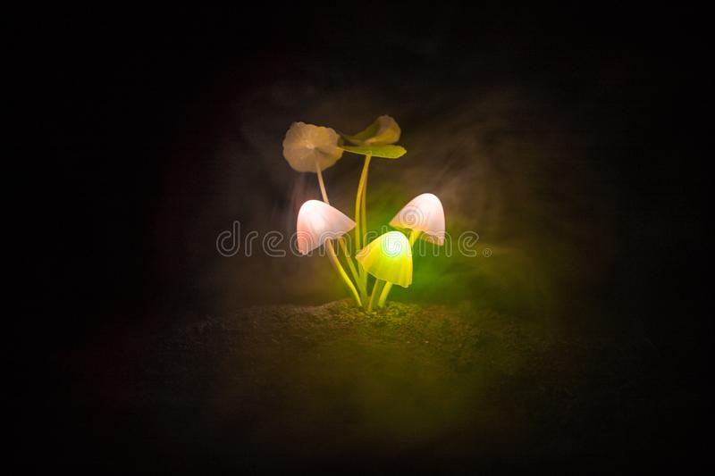 Three fantasy glowing mushrooms in mystery dark forest close-up. Beautiful macro shot of magic mushroom or three souls lost in ava stock photos