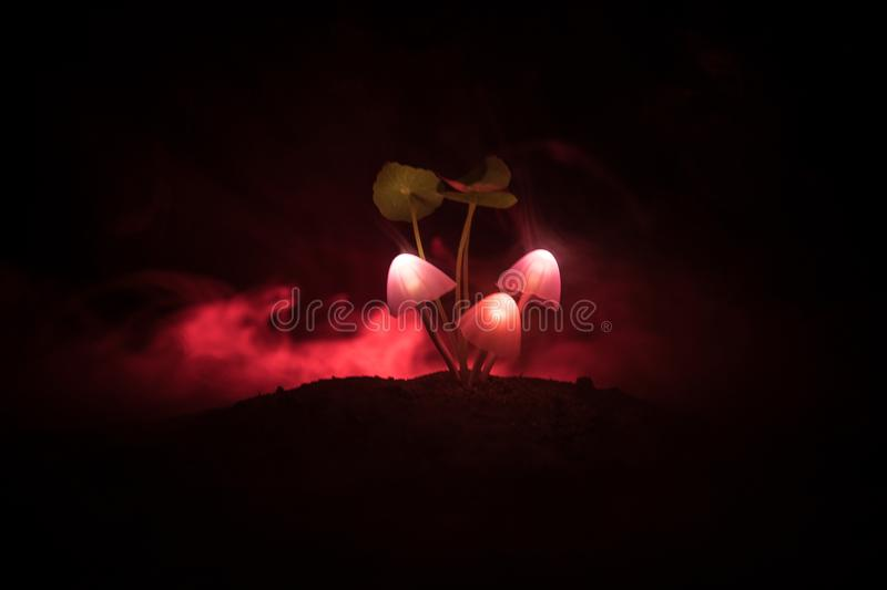 Three fantasy glowing mushrooms in mystery dark forest close-up. Beautiful macro shot of magic mushroom or three souls lost in ava. Tar forest. Fairy lights on stock images