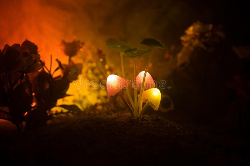 Three fantasy glowing mushrooms in mystery dark forest close-up. Beautiful macro shot of magic mushroom or three souls lost in ava. Tar forest. Fairy lights on royalty free stock photography