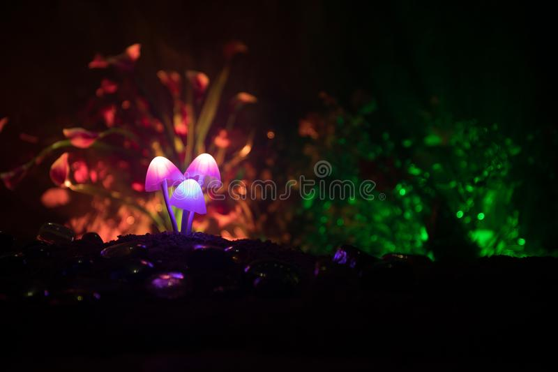 Three fantasy glowing mushrooms in mystery dark forest close-up. Beautiful macro shot of magic mushroom or three souls lost in ava. Tar forest. Fairy lights on royalty free stock images