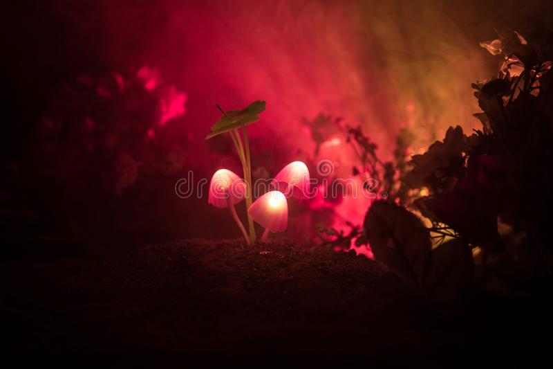 Three fantasy glowing mushrooms in mystery dark forest close-up. Beautiful macro shot of magic mushroom or three souls lost in ava. Tar forest. Fairy lights on royalty free stock image