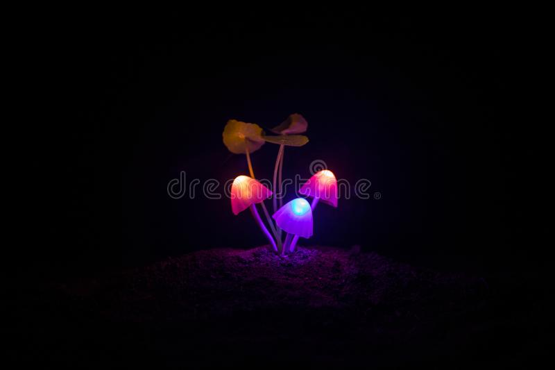 Three fantasy glowing mushrooms in mystery dark forest close-up. Beautiful macro shot of magic mushroom or three souls lost in ava royalty free stock images