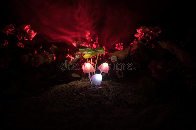 Three fantasy glowing mushrooms in mystery dark forest close-up. Beautiful macro shot of magic mushroom or three souls lost in ava. Tar forest. Fairy lights on stock image