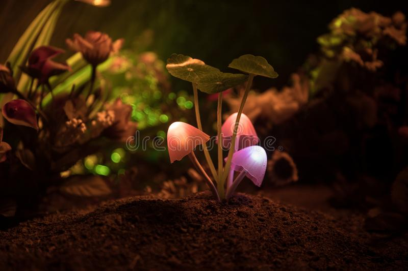 Three fantasy glowing mushrooms in mystery dark forest close-up. Beautiful macro shot of magic mushroom or three souls lost in ava. Tar forest. Fairy lights on stock photos