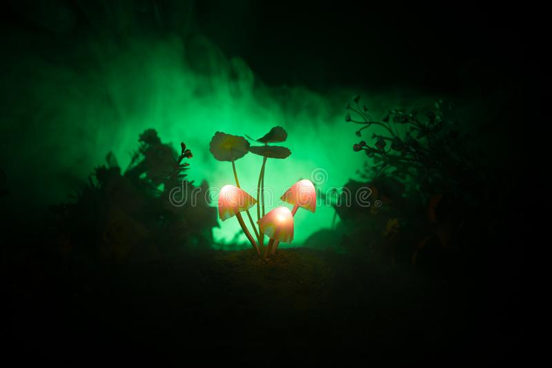 Three fantasy glowing mushrooms in mystery dark forest close-up. Beautiful macro shot of magic mushroom or three souls lost in ava. Tar forest. Fairy lights on stock photo
