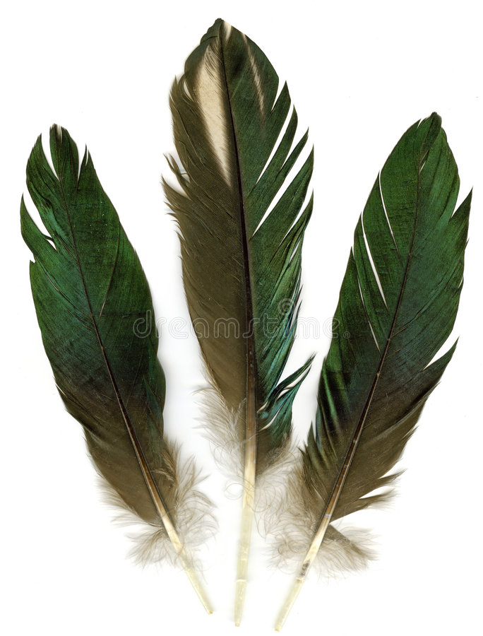 Three feathers. Three raven feathers on white background