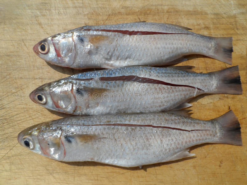 Three fishes stock photo